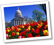 Photo of tulips blooming in front of the State Capitol in spring.